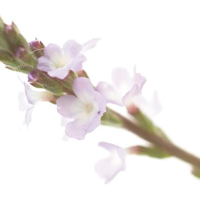 Fleurs de bach vernain