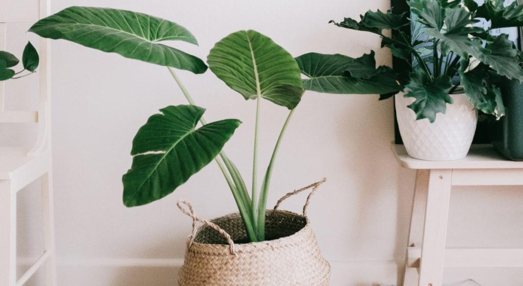 Votre guide ultime pour prendre soin de vos plantes d'intérieur